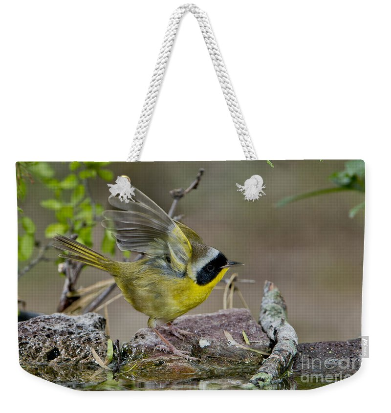 Common Yellowthroat Weekender Tote Bag featuring the photograph Common Yellowthroat by Anthony Mercieca