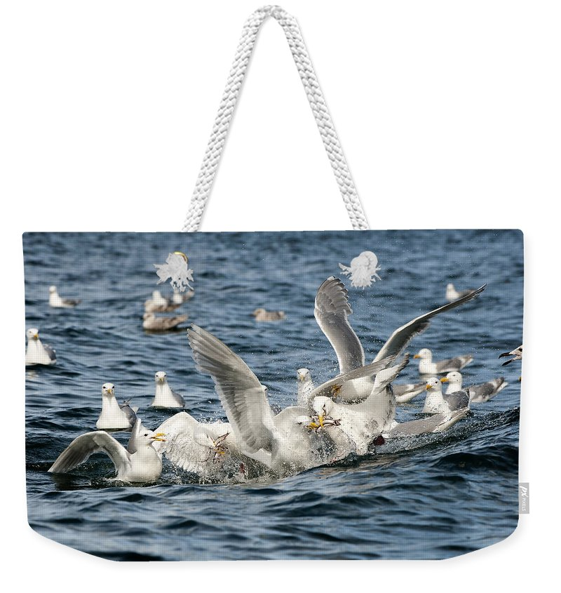 Gull Weekender Tote Bag featuring the photograph Competition by Ted Raynor