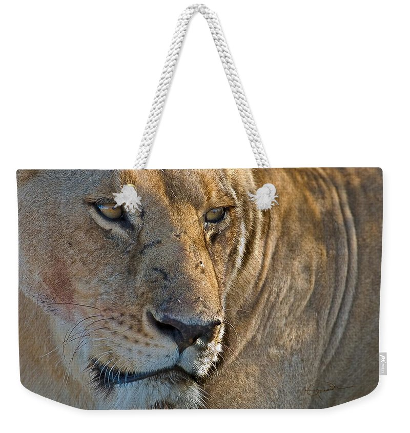 Africa Weekender Tote Bag featuring the photograph Concentration by Colette Panaioti