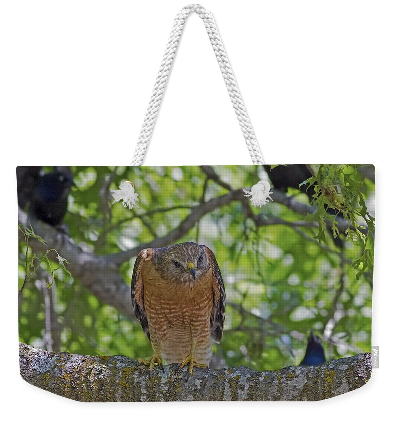 Concentration Weekender Tote Bag featuring the photograph Concentration by Gary Holmes