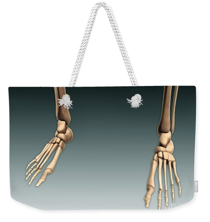 Horizontal Weekender Tote Bag featuring the digital art Conceptual Image Of Bones In Human Legs by Stocktrek Images
