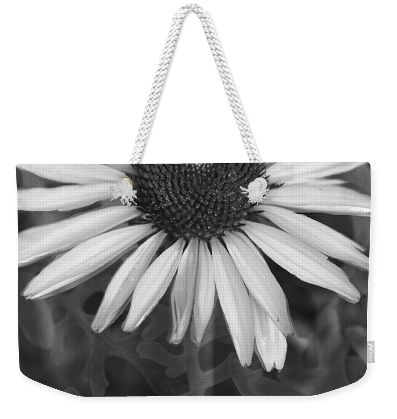 Cone Flower Weekender Tote Bag featuring the photograph Coneflower And Dusty Miller Bw by Lesa Fine