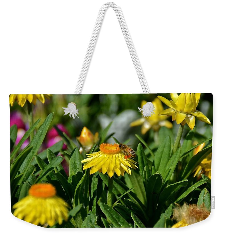 Flower Weekender Tote Bag featuring the photograph Coneflowers And Friend by Carol Bradley