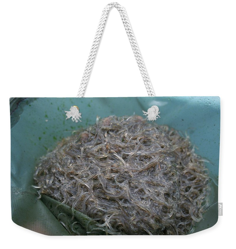 Designs Similar to Container Of Elvers