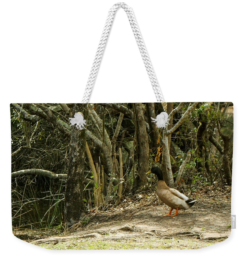 Mallard Weekender Tote Bag featuring the photograph Contimplating A Swim by Mechala Matthews