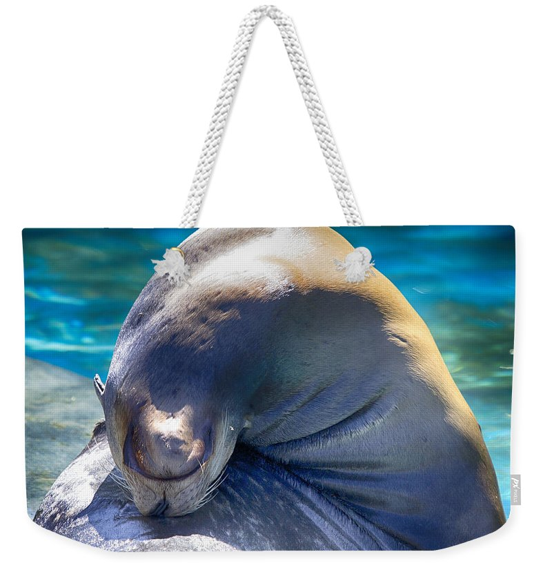 Sea Lion Weekender Tote Bag featuring the photograph Contortionist by Douglas Barnard
