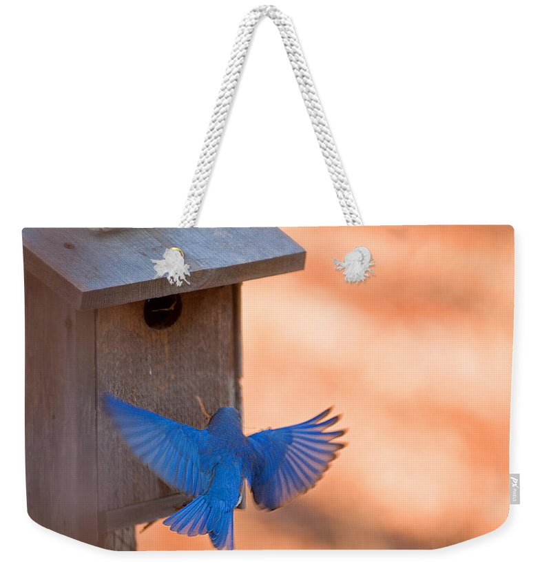 Contrast Colors Weekender Tote Bag featuring the photograph Contrast In Colors by Randall Branham