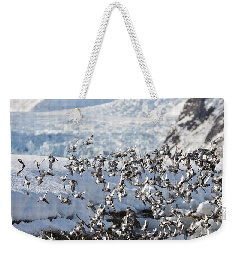 Sandpiper Weekender Tote Bag featuring the photograph Controlled Chaos by Ted Raynor