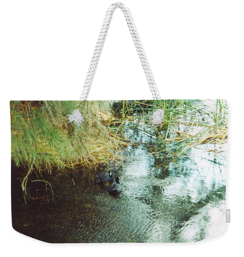 Lakes Park In Ft.myers Weekender Tote Bag featuring the photograph Coots by Robert Floyd