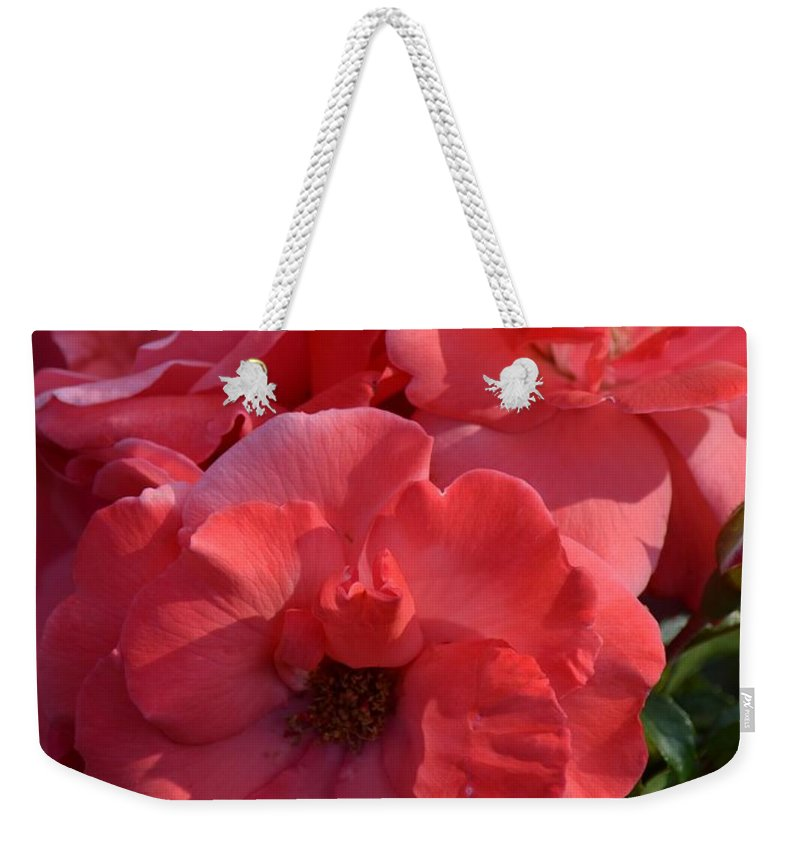 Coral Roses 2013 Weekender Tote Bag featuring the photograph Coral Roses 2013 by Maria Urso