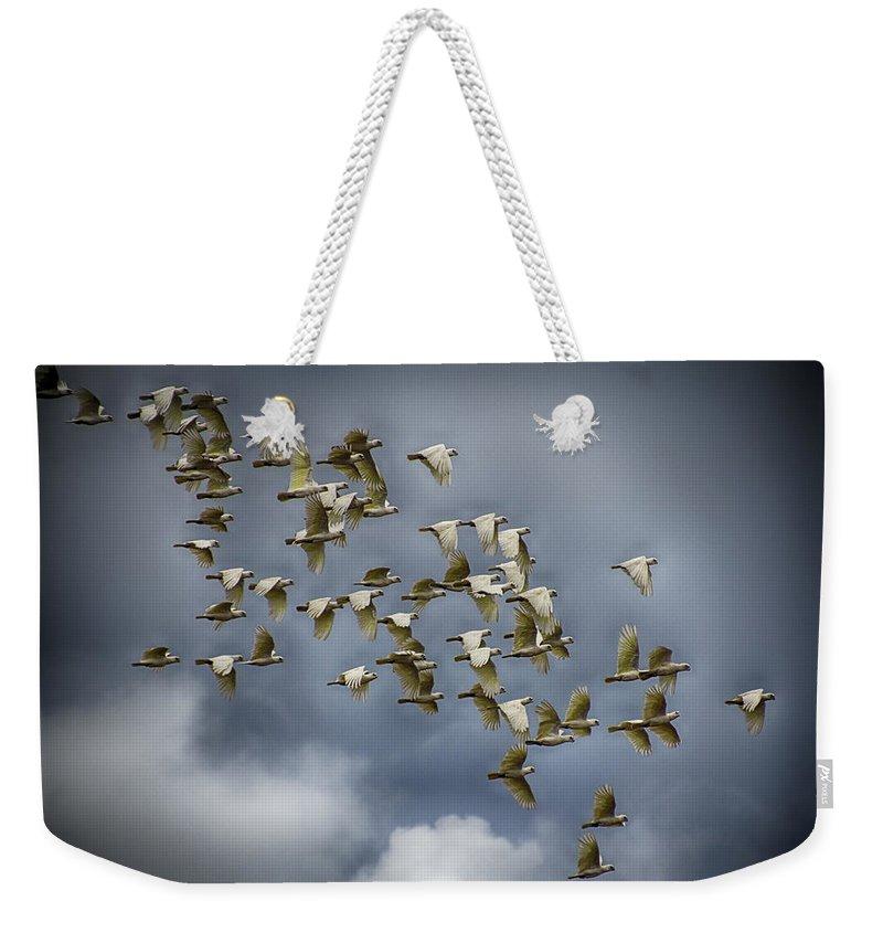 Corella Weekender Tote Bag featuring the photograph Corella Flock by Douglas Barnard