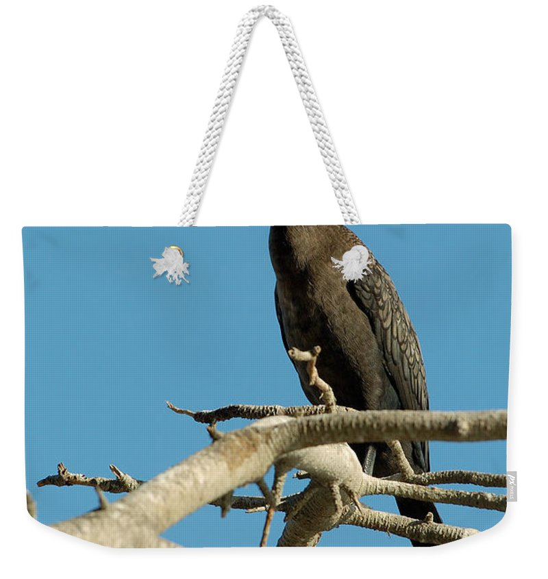 Cormorants Weekender Tote Bag featuring the photograph Cormorant by Sebastian Musial