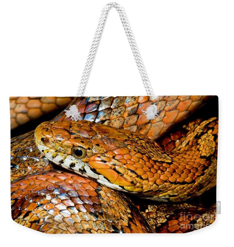 Animal Weekender Tote Bag featuring the photograph Corn Snake by Millard H Sharp