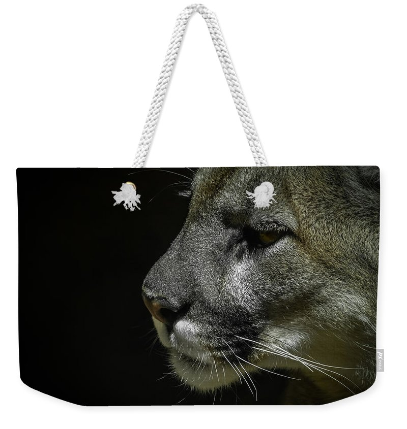 Mountain Lion Weekender Tote Bag featuring the photograph Cougar by Ernie Echols