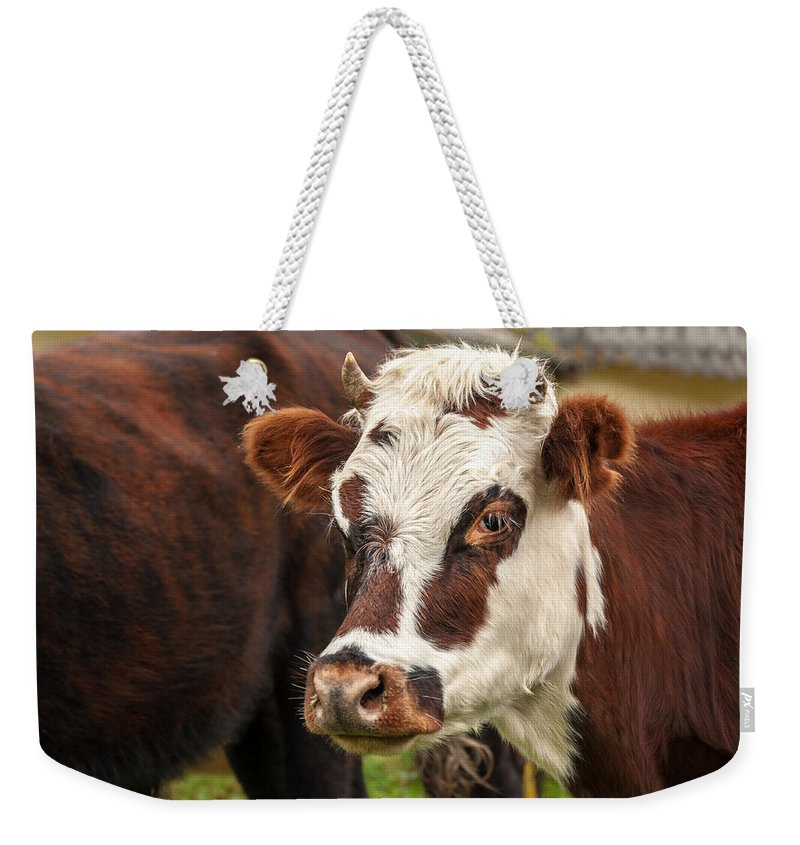 Cow Weekender Tote Bag featuring the photograph Cow Closeup by Jess Kraft