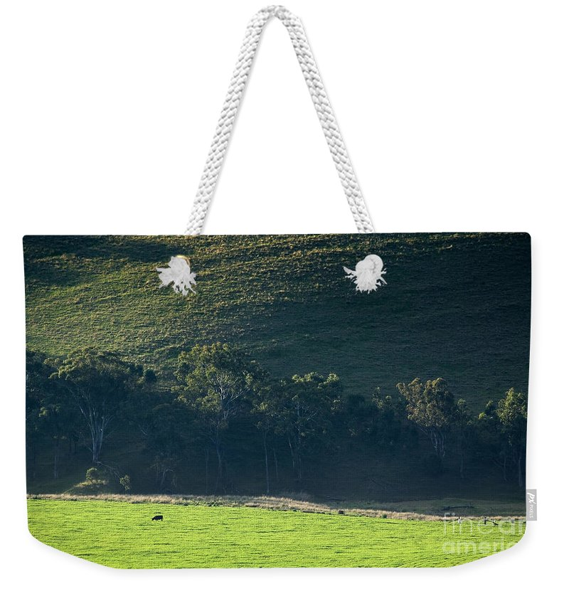 Agriculture Weekender Tote Bag featuring the photograph Cow In Field by Tim Hester