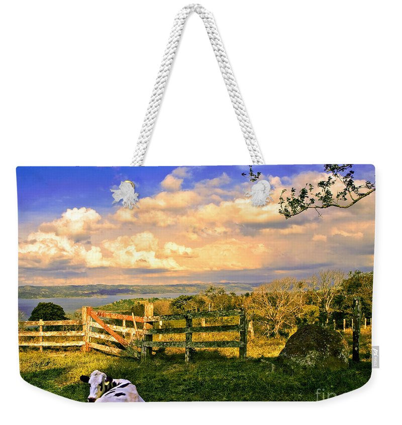 Cow Weekender Tote Bag featuring the photograph Cow Out To Pasture In Costa Rica by Madeline Ellis