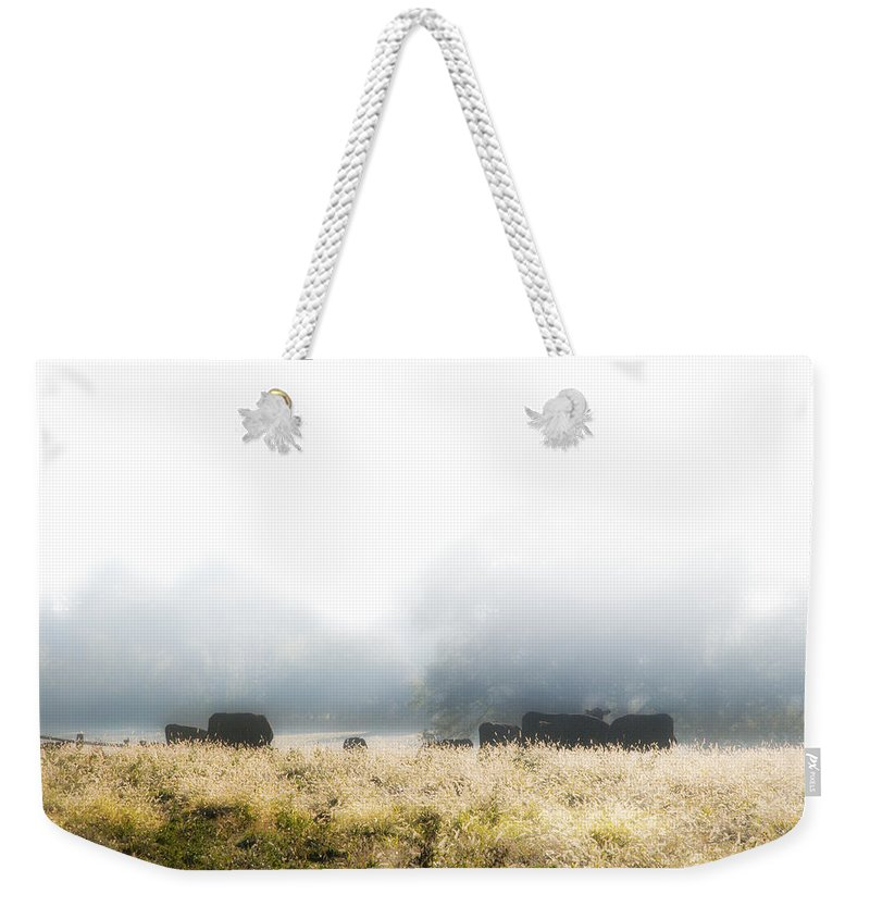 Cows Weekender Tote Bag featuring the photograph Cows In A Foggy Field by Bill Cannon