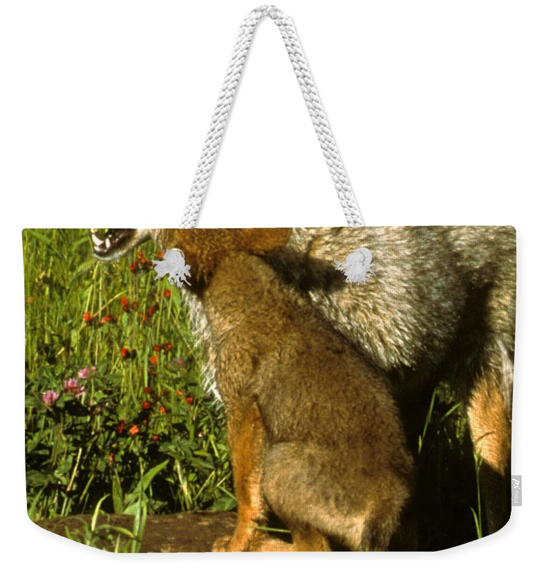 Coyote Weekender Tote Bag featuring the photograph Coyote And Pup by Larry Allan
