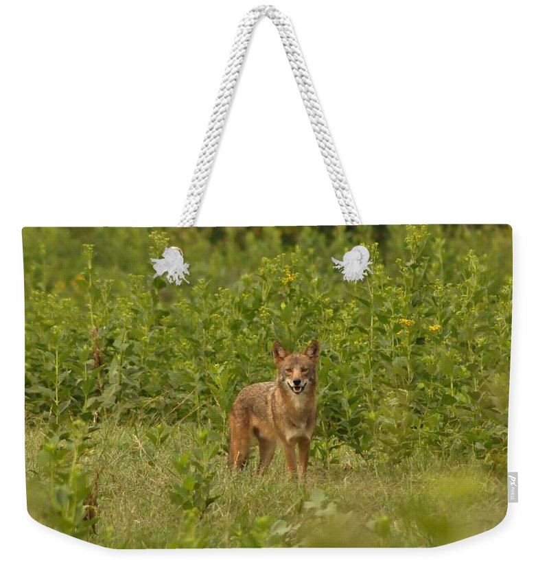 Wild Weekender Tote Bag featuring the photograph Coyote Happy by Eric Liller