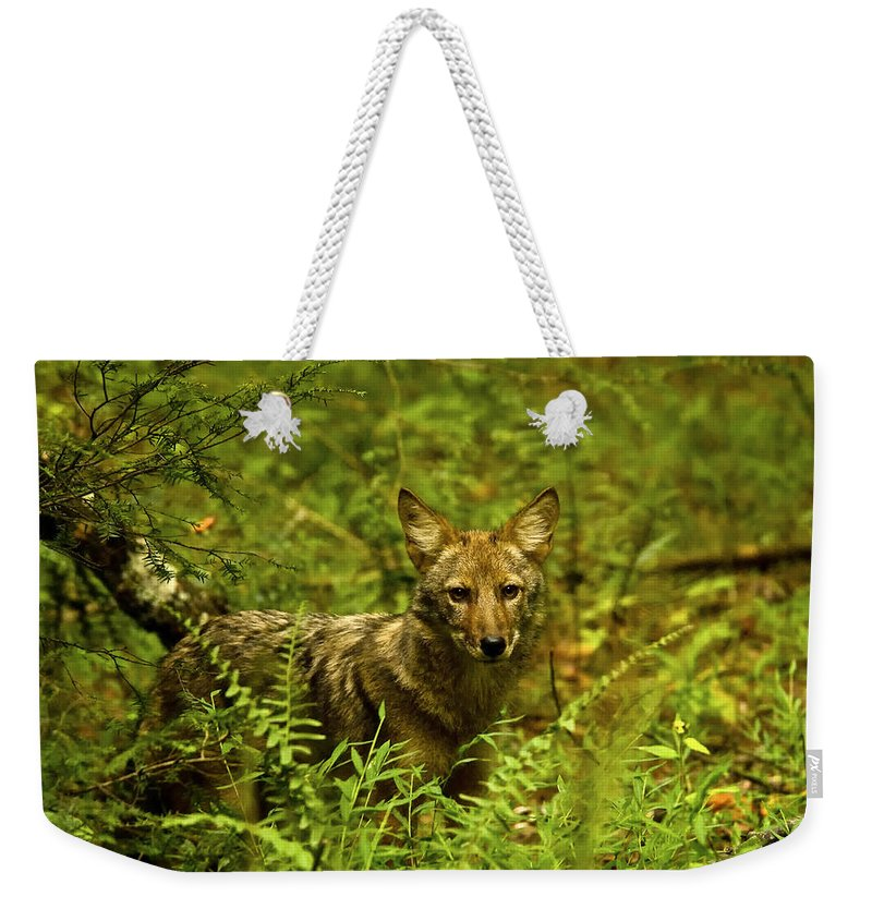 Coyote Weekender Tote Bag featuring the photograph Coyote Of The Woods by Timothy Flanigan