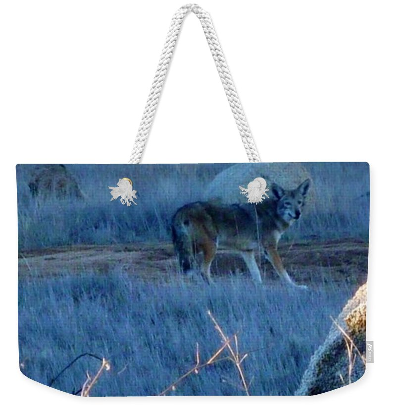 Coyote Wild Weekender Tote Bag featuring the photograph Coyote Wild by Susan Garren