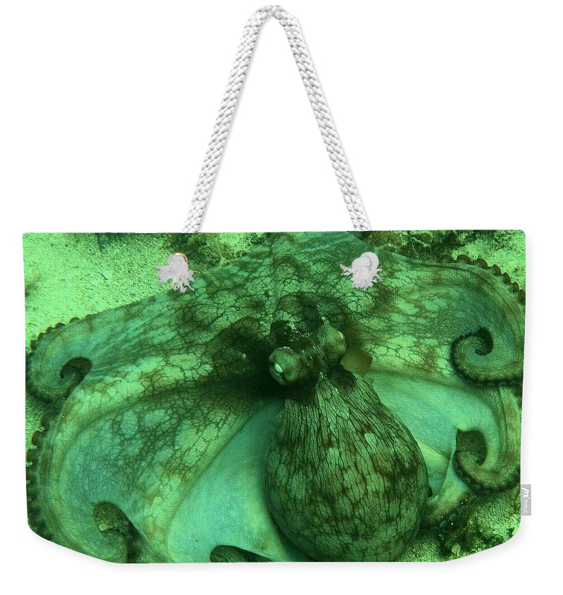 Common Octopus Weekender Tote Bag featuring the photograph Cozumel Octopus by Adam Jewell