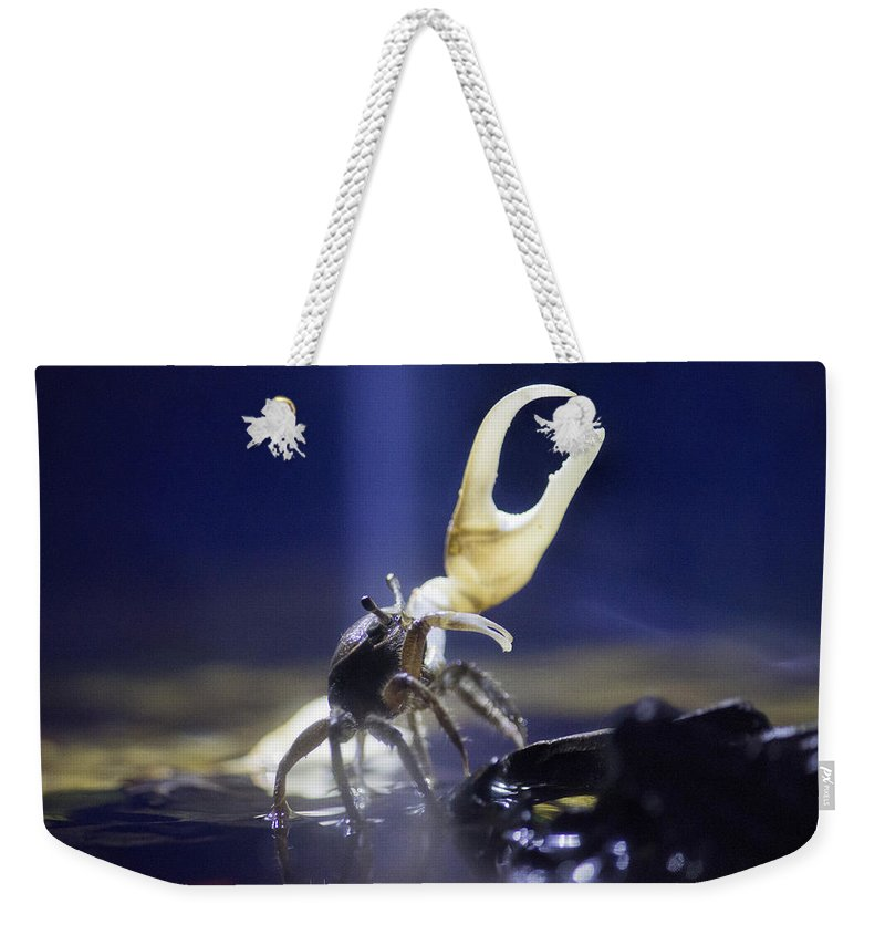 Crab Weekender Tote Bag featuring the photograph Crab Star by Becca Buecher