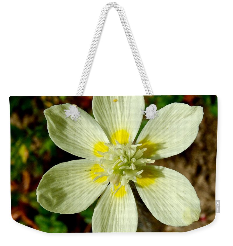 Cream Cups Weekender Tote Bag featuring the photograph Cream Cup In Park Sierra-ca by Ruth Hager