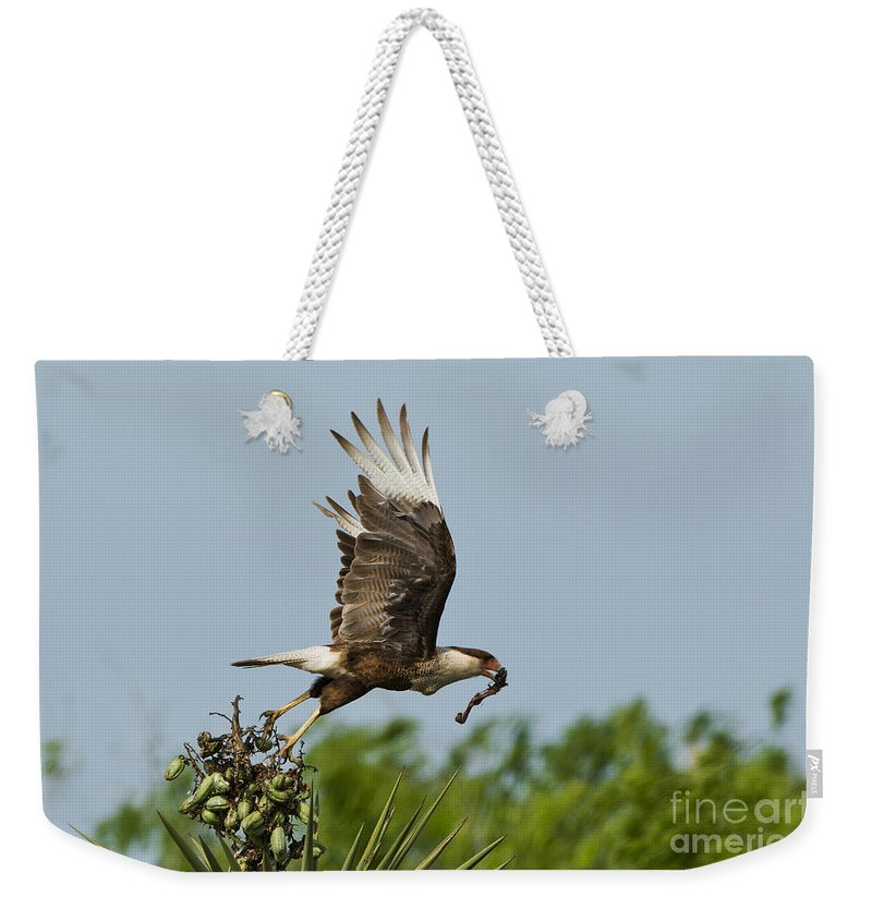 Crested Caracara Weekender Tote Bag featuring the photograph Crested Caracara by Anthony Mercieca