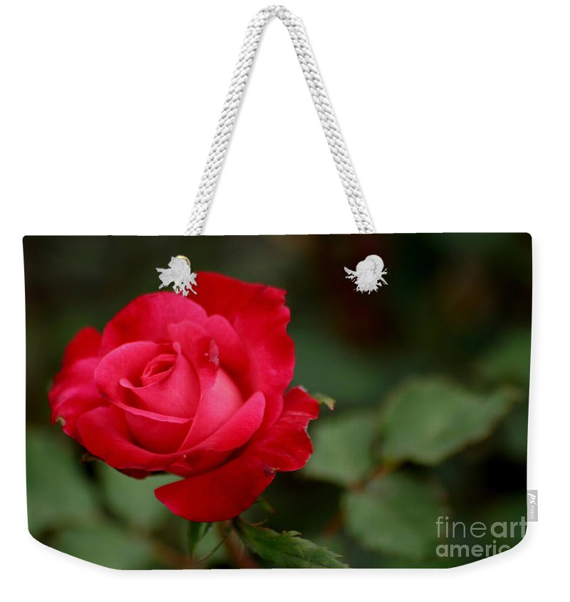 Rose Weekender Tote Bag featuring the photograph Crimson Rose by Living Color Photography Lorraine Lynch