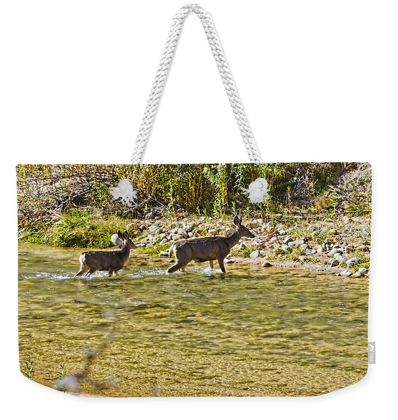 Zion National Park Weekender Tote Bag featuring the photograph Crossing The River by Jon Berghoff