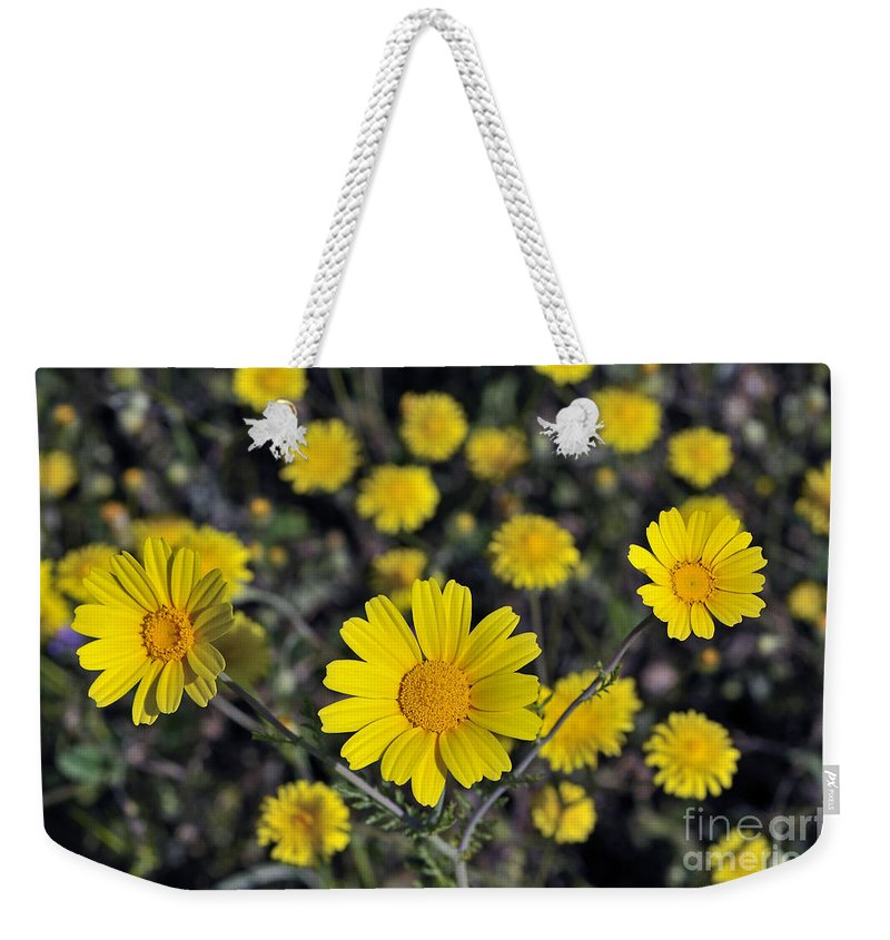 Chrysanthemum Coronarium; Glebionis Coronaria; Crown Daisy; Daisy; Daisies; Yellow; Flower; Wild; Plant; Spring; Print; Photograph; Photography; Springtime; Season; Nature; Natural; Natural Environment; Natural World; Flora; Bloom; Blooming; Blossom; Blossoming; Color; Colour; Colorful; Colourful; Earth; Environment; Ecological; Ecology; Country; Landscape; Countryside; Scenery; Macro; Close-up; Detail; Details; Esthetic; Esthetics; Artistic; Flowers Weekender Tote Bag featuring the photograph Crown Daisies by George Atsametakis