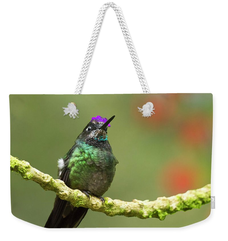 Magnificent Hummingbird Weekender Tote Bag featuring the photograph Crowned Hummingbird by Heiko Koehrer-Wagner