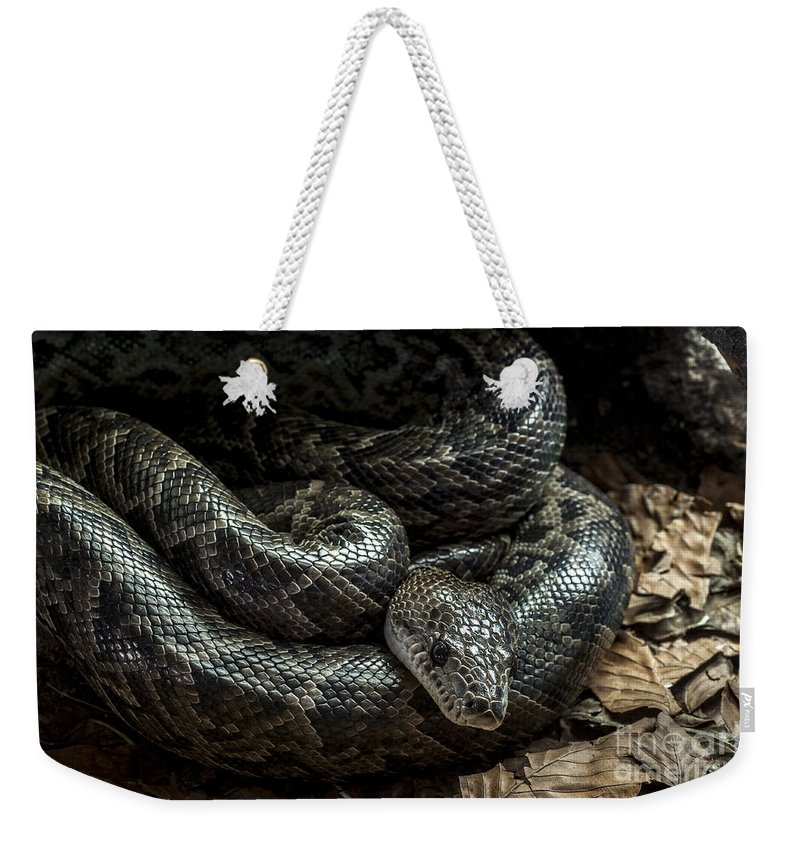 Cuban Boa Weekender Tote Bag featuring the photograph Cuban Boa by Arterra Picture Library