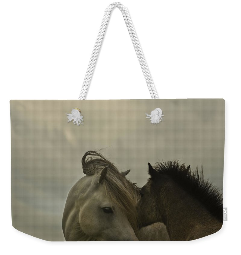Horses Weekender Tote Bag featuring the photograph Cuddle Me by Angel Ciesniarska