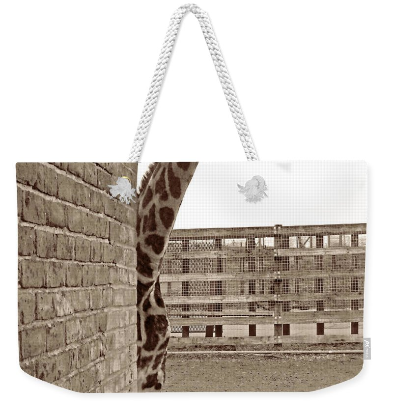England Weekender Tote Bag featuring the photograph Curiosity by Julia Raddatz