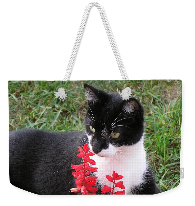Maine Coon Weekender Tote Bag featuring the photograph Tree Climber by Marisa Horn