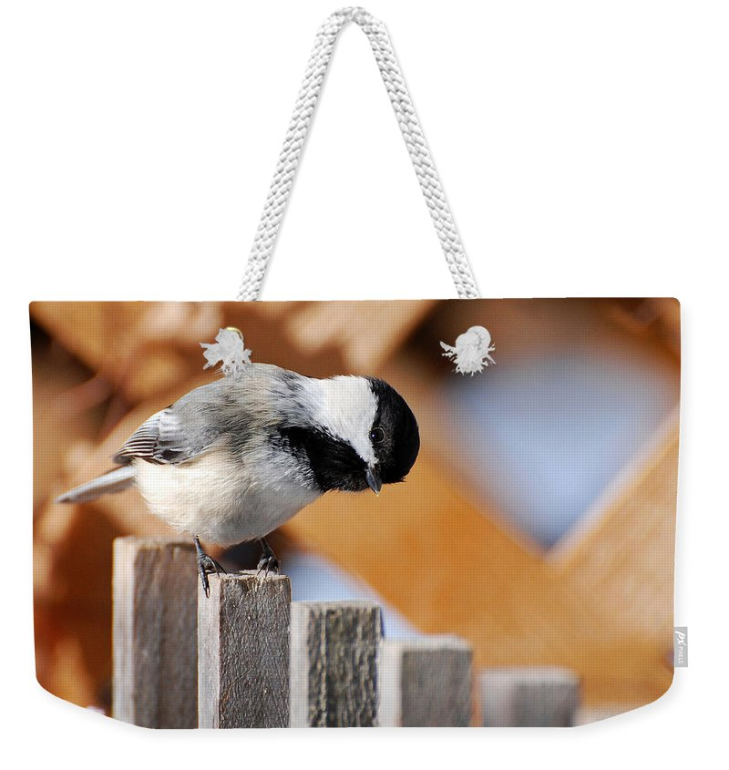 Bird Weekender Tote Bag featuring the photograph Curious Chickadee by Christina Rollo