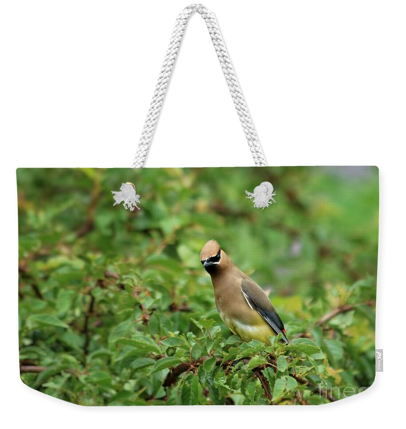 Cedar Weekender Tote Bag featuring the photograph Curious by Kenny Glotfelty
