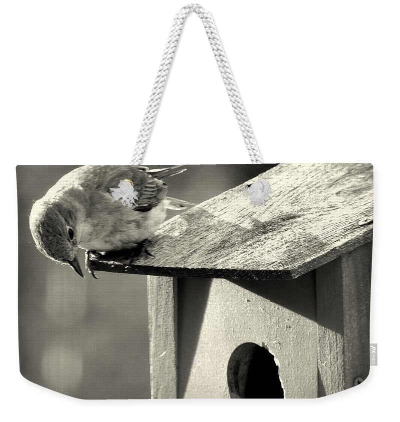 Bluebird Weekender Tote Bag featuring the photograph Curious by Mim White