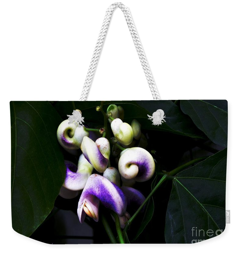 Snail Vine Weekender Tote Bag featuring the photograph Curlicues by RC DeWinter