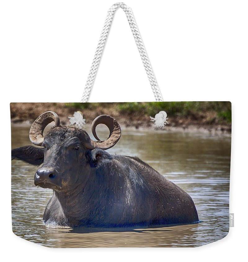 Water Buffalo Weekender Tote Bag featuring the photograph Curly Horns by Douglas Barnard