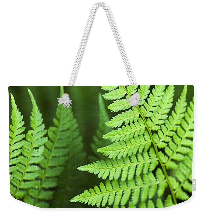Fern Weekender Tote Bag featuring the photograph Curved Fern Leaf by Christina Rollo