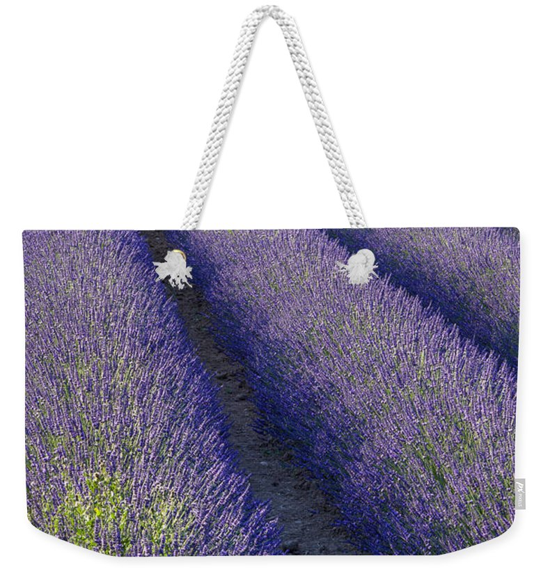 Aroma Weekender Tote Bag featuring the photograph Curved Rows by Brian Jannsen
