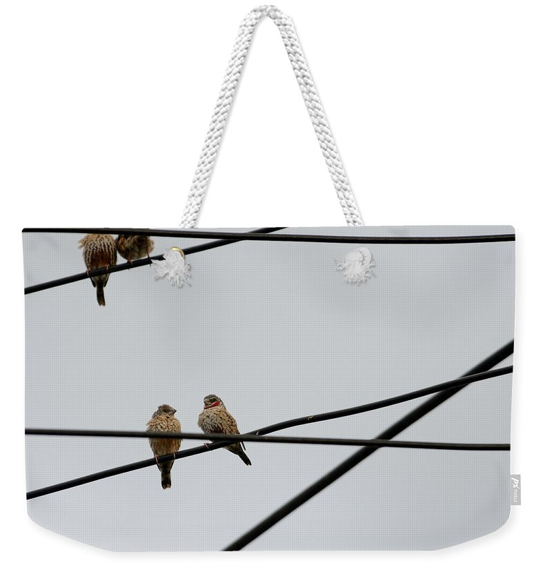 Cut-throat Finch Weekender Tote Bag featuring the photograph Cut-throat Wires by Ian Ashbaugh