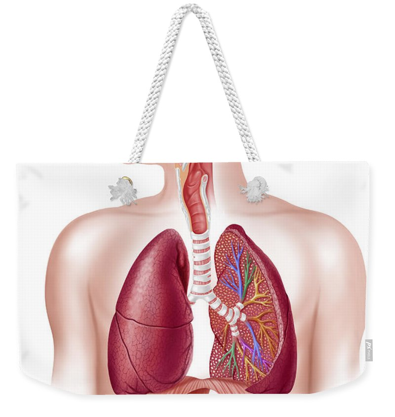 Air Weekender Tote Bag featuring the digital art Cutaway Diagram Of Human Respiratory by Leonello Calvetti