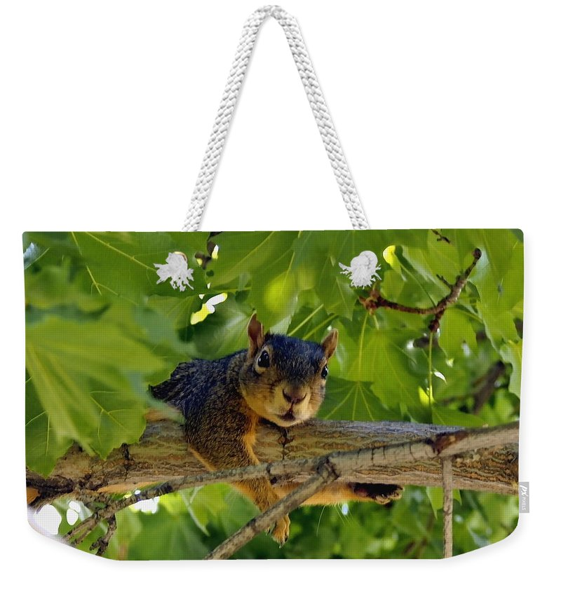 Nature Weekender Tote Bag featuring the photograph Cute Fuzzy Squirrel In Tree by Amy McDaniel