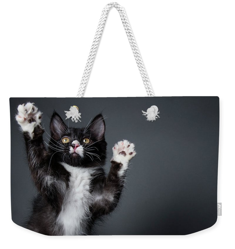 Pets Weekender Tote Bag featuring the photograph Cute Kitten Playing - The Amanda by Amandafoundation.org