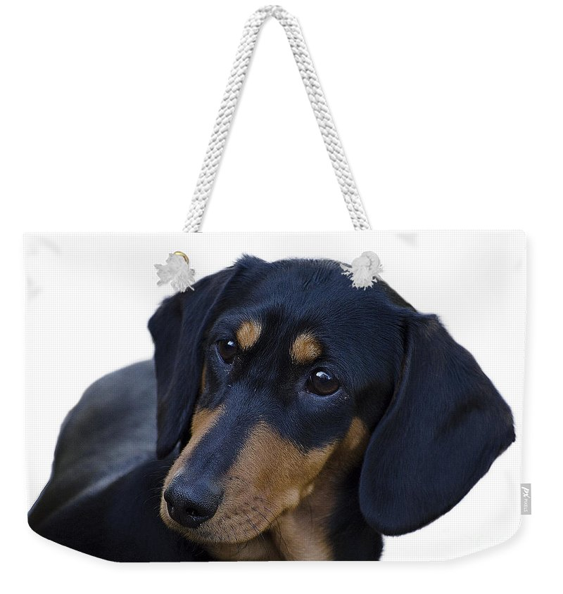 Dog Weekender Tote Bag featuring the photograph Dachshund by Linsey Williams